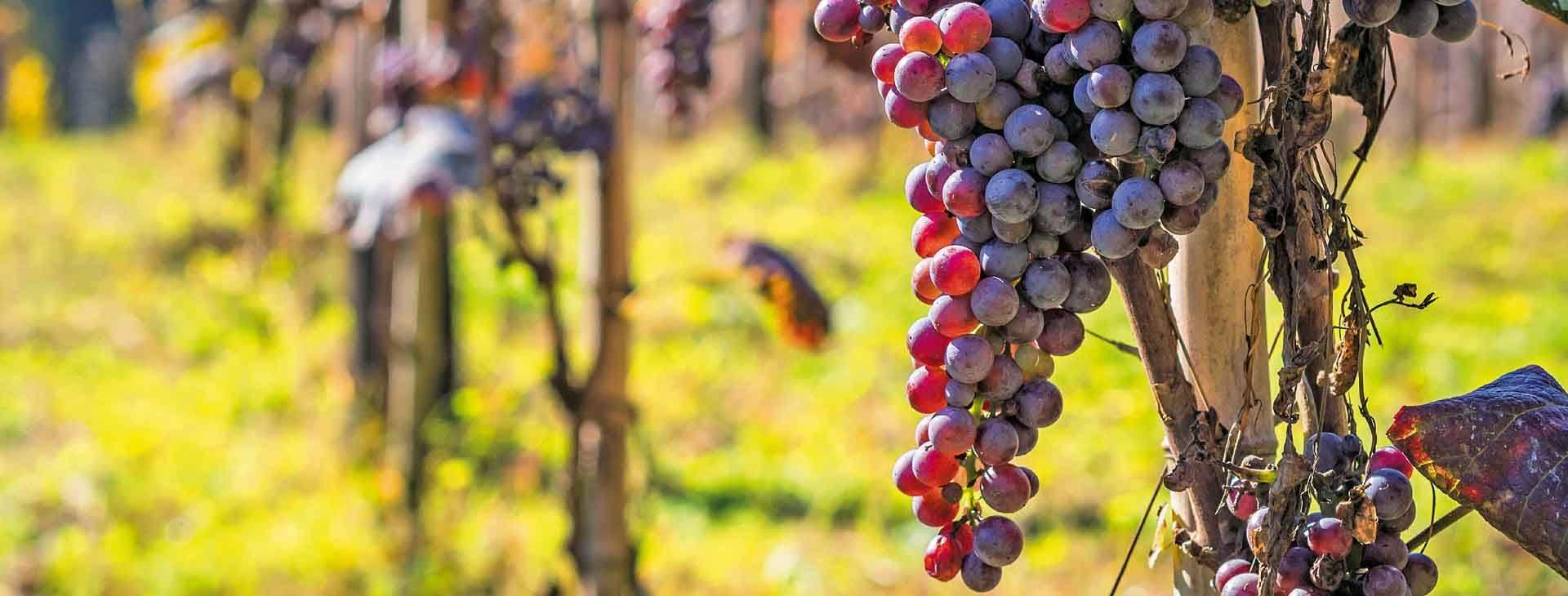 Gruzja - kraina wina