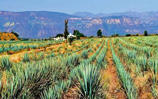 Meksyk - trzynaście poziomów majańskiego nieba