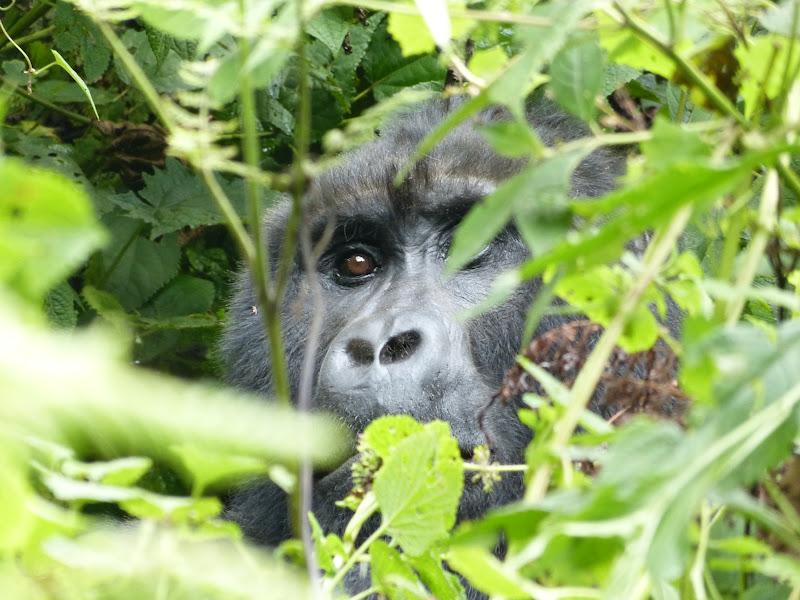 Uganda i Rwanda - W Poszukiwaniu Goryli