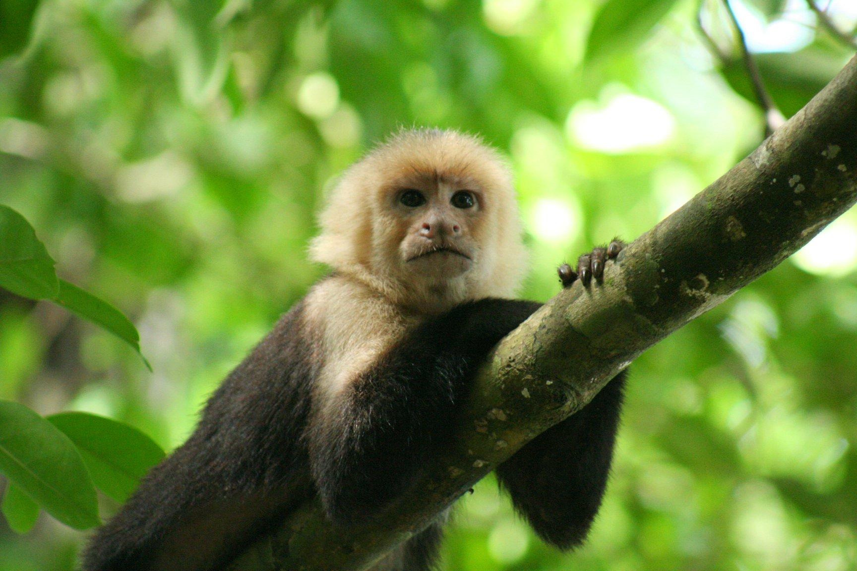 Kostaryka Perla Ameryki Srodkowej - Zdjecie nr 2